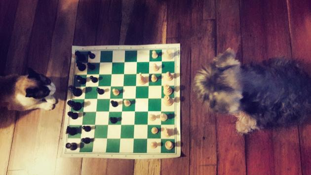 Teaching chess for free part II