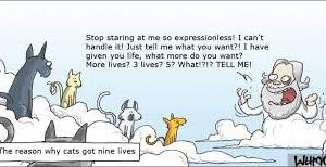 The Cat With Nine Lives