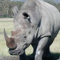 how can make look like rhino
