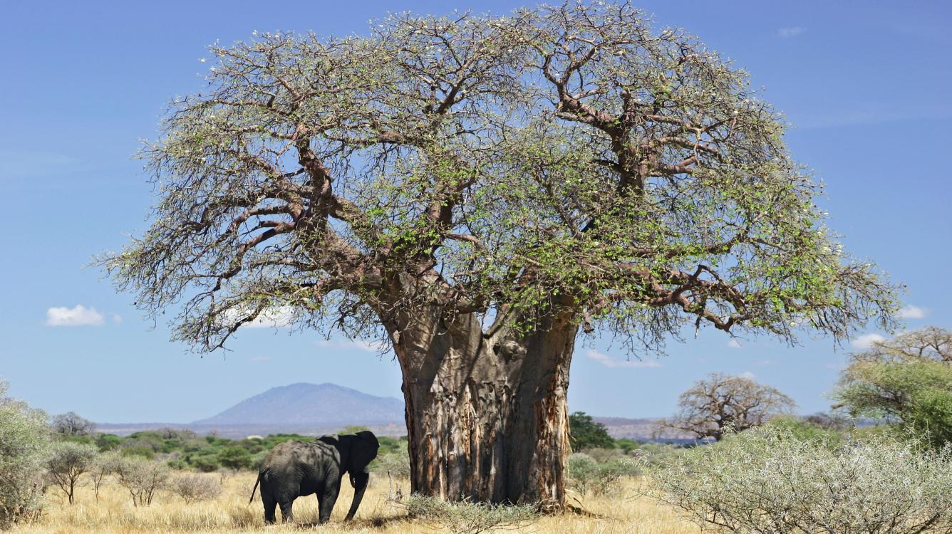 Engines Navigating The Tree: AB-Pruning Minimax