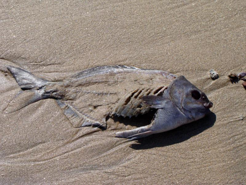Too hard for Stockfish?