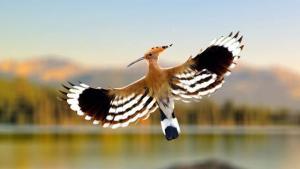 Cours Ornithologique 6