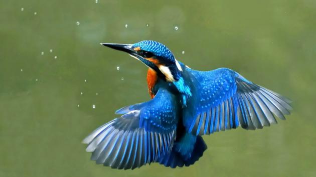 Cours Ornithologique 7