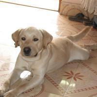 My Cute Doggie