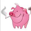 Team Pigs