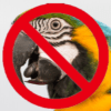 Anti-Parrot Faction