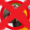 Anti-anti-Parrot faction