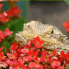 Bearded Dragon/other reptile lovers