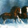 HORSEMEN & WOMEN