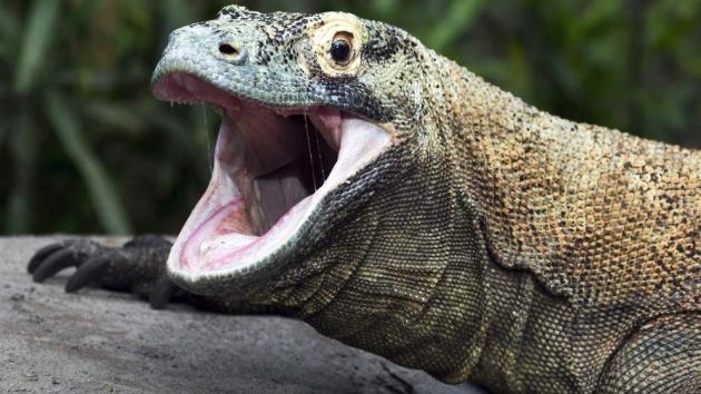 Komodo Overwhelms Erenburg In Odds Rematch