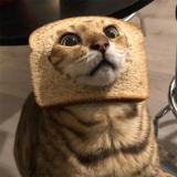 CrimsonBreadCat
