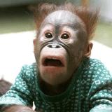 monkeywithgun