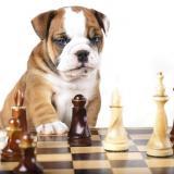 ChessPuppy123