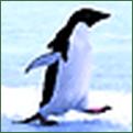 Penguincw
