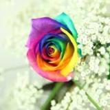 Rainbow68