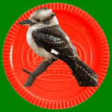 Kookaburrra