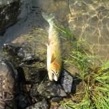 fishnguy