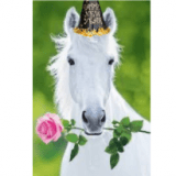 horselover123