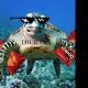 TurtleLvr69