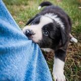Fearless_puppy