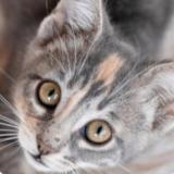 Mako_Cat