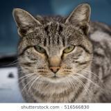 kittycat35