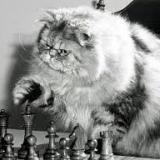 chess_cat_1000