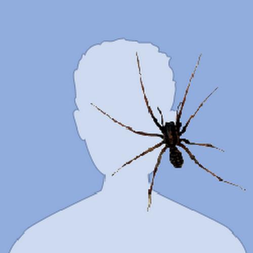 Картинка с пауком в вк, первым