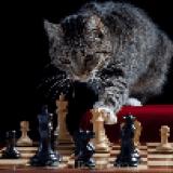 chesshouse2