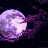 Moonwarrior_1