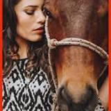 2000horses