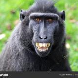 Macaco1986