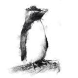 penguinone1