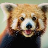 favoritepanda