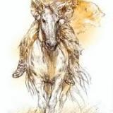 Cavall_blanc