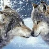 WolfGirl2012