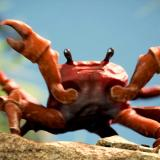 CrabCow1