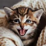 CatFamily4