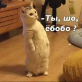 Cat_Warrion