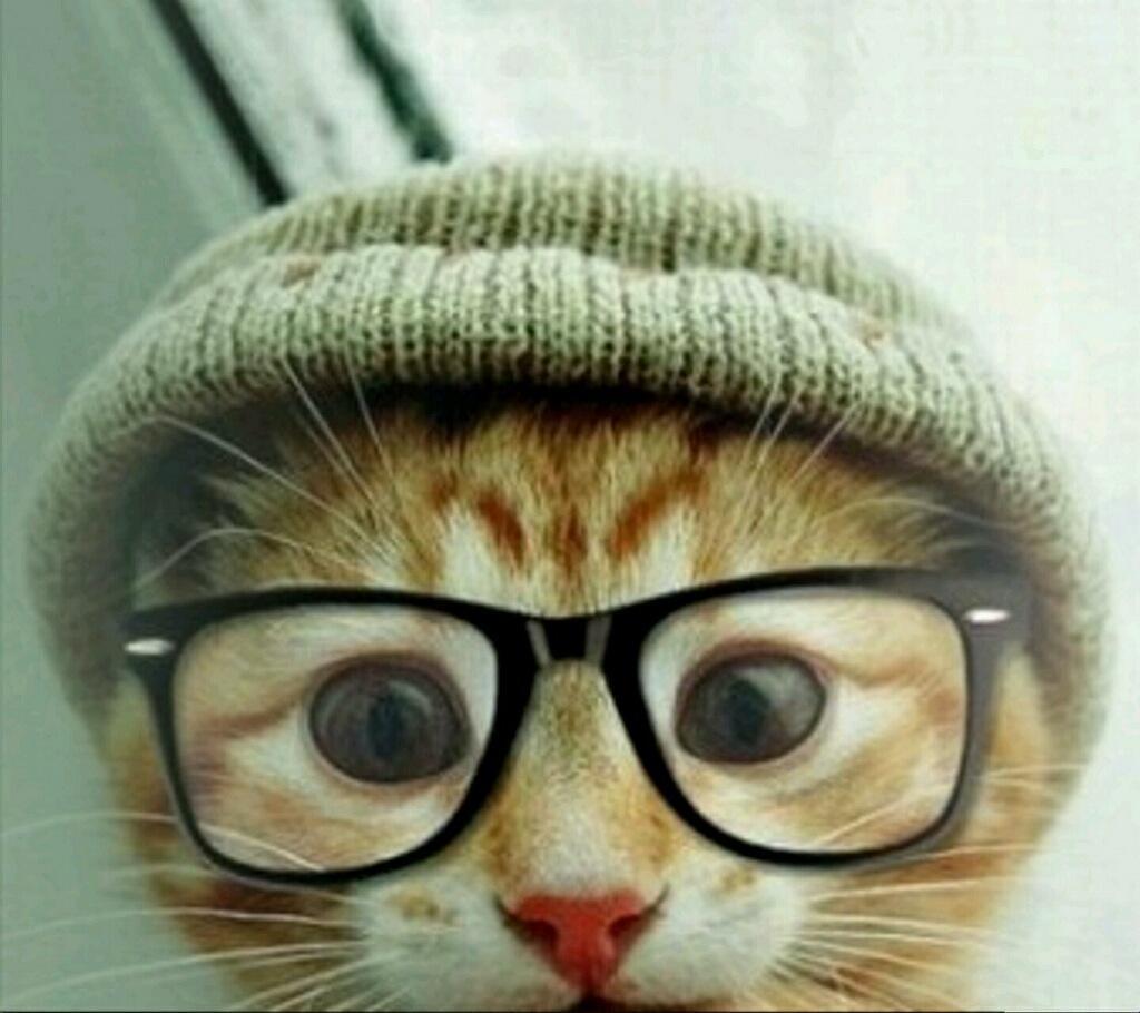 Прикольные картинки на аву коты, анимация лабиринт