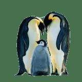 Penguinlover01