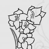 FlowerBrewer