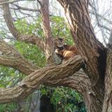 Snowcat14