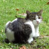 Kitten113