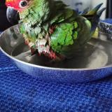 Bird-Keeper