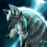 Midnight_Wolf1
