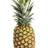 pineapplepro123